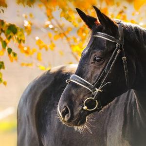 5 Pferd Ansicht 70x50cm